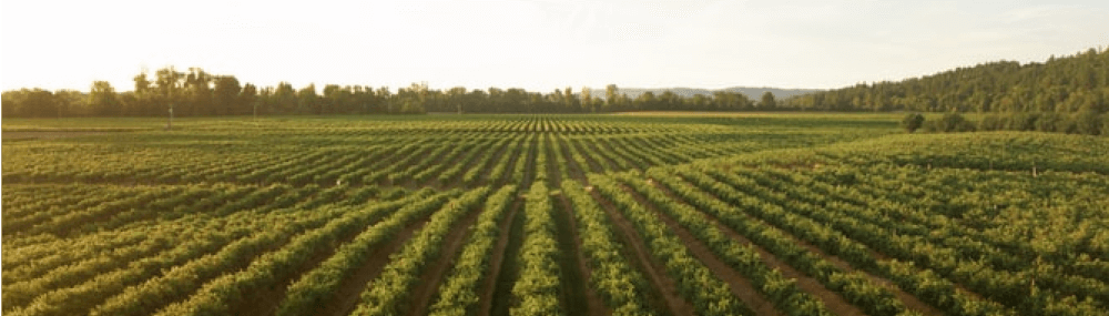 Innovative traceability solutions in agriculture